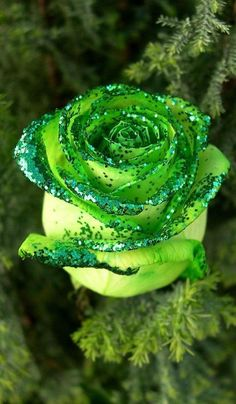 hoa hong xanh dep