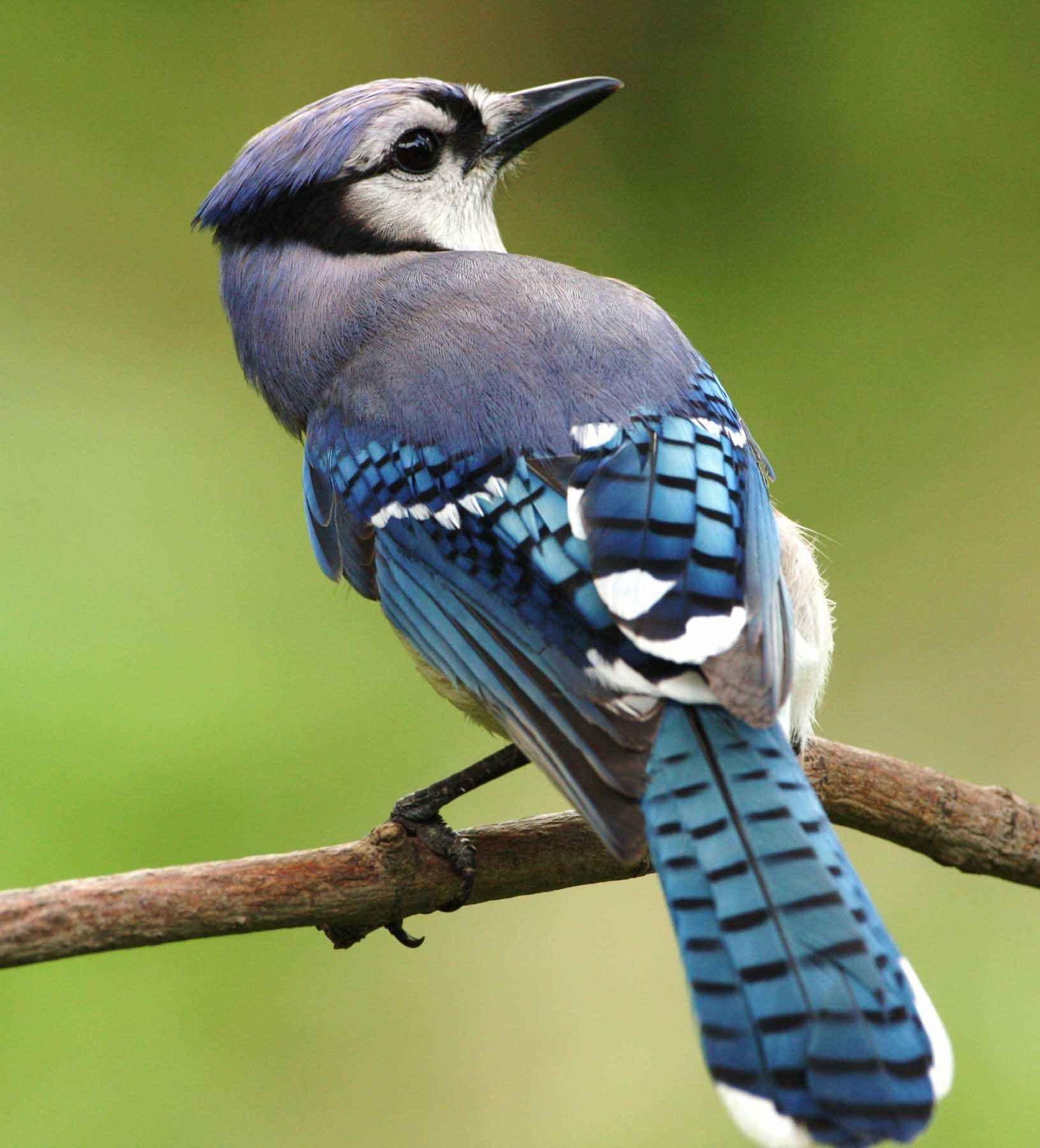 Ảnh những loài chim đẹp nhất, với những màu sắc tuyệt đẹp