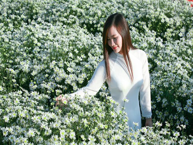Cuc Hoa Mi No Vao Thang May