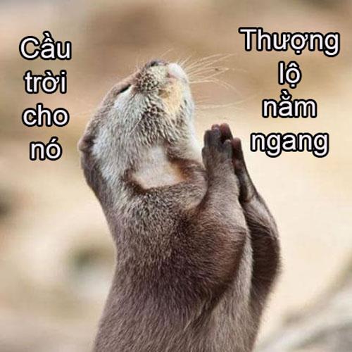 Anh Che Hai Vui Vl
