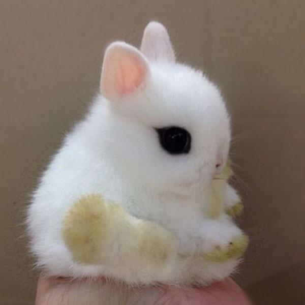 Xem những hình ảnh thỏ con đáng yêu vô cùng