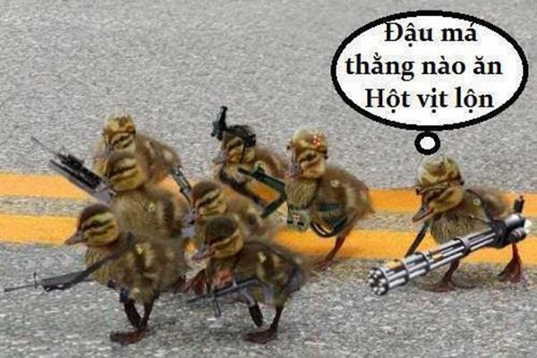 Nhung Anh Che Hai Huoc Nhat Vn