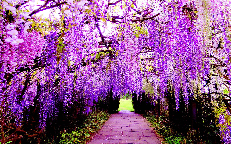 Con đường hoa màu tím độc đáo