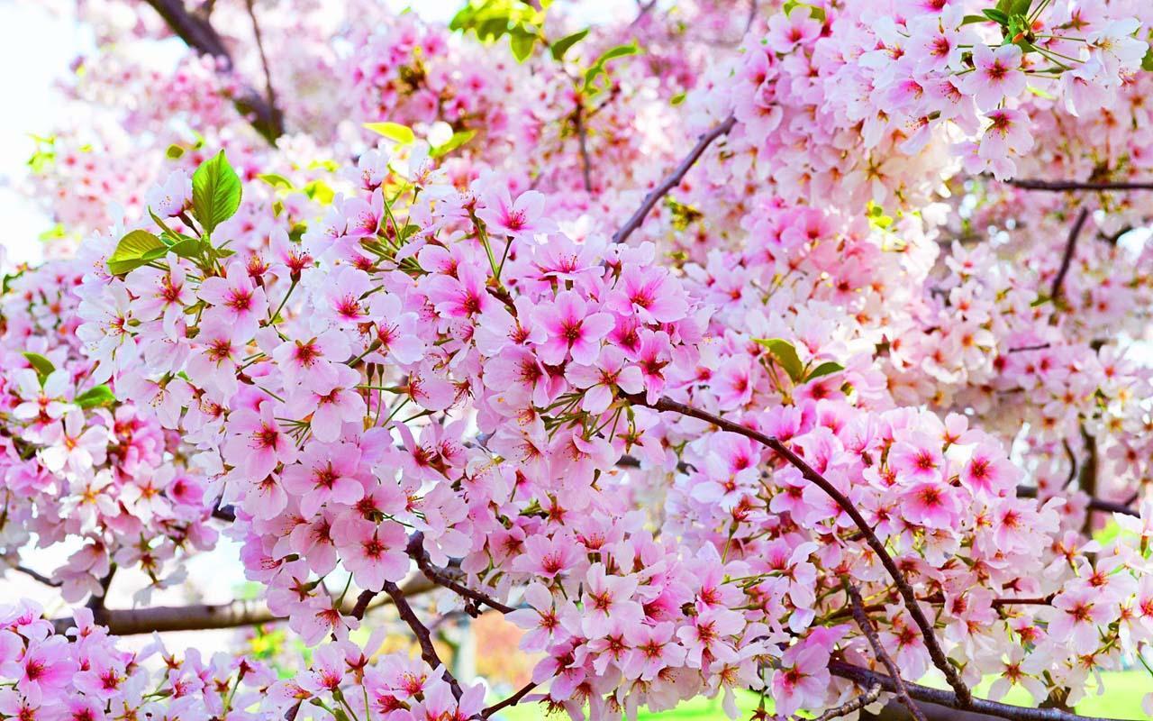 hinh hoa dep