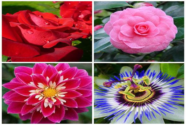 Hình ảnh những loài hoa đẹp