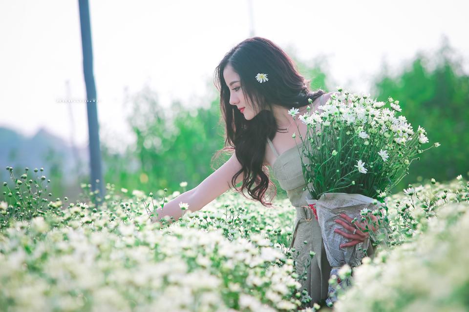 Hinh Nen Hoa Cuc Hoa Mi Dep