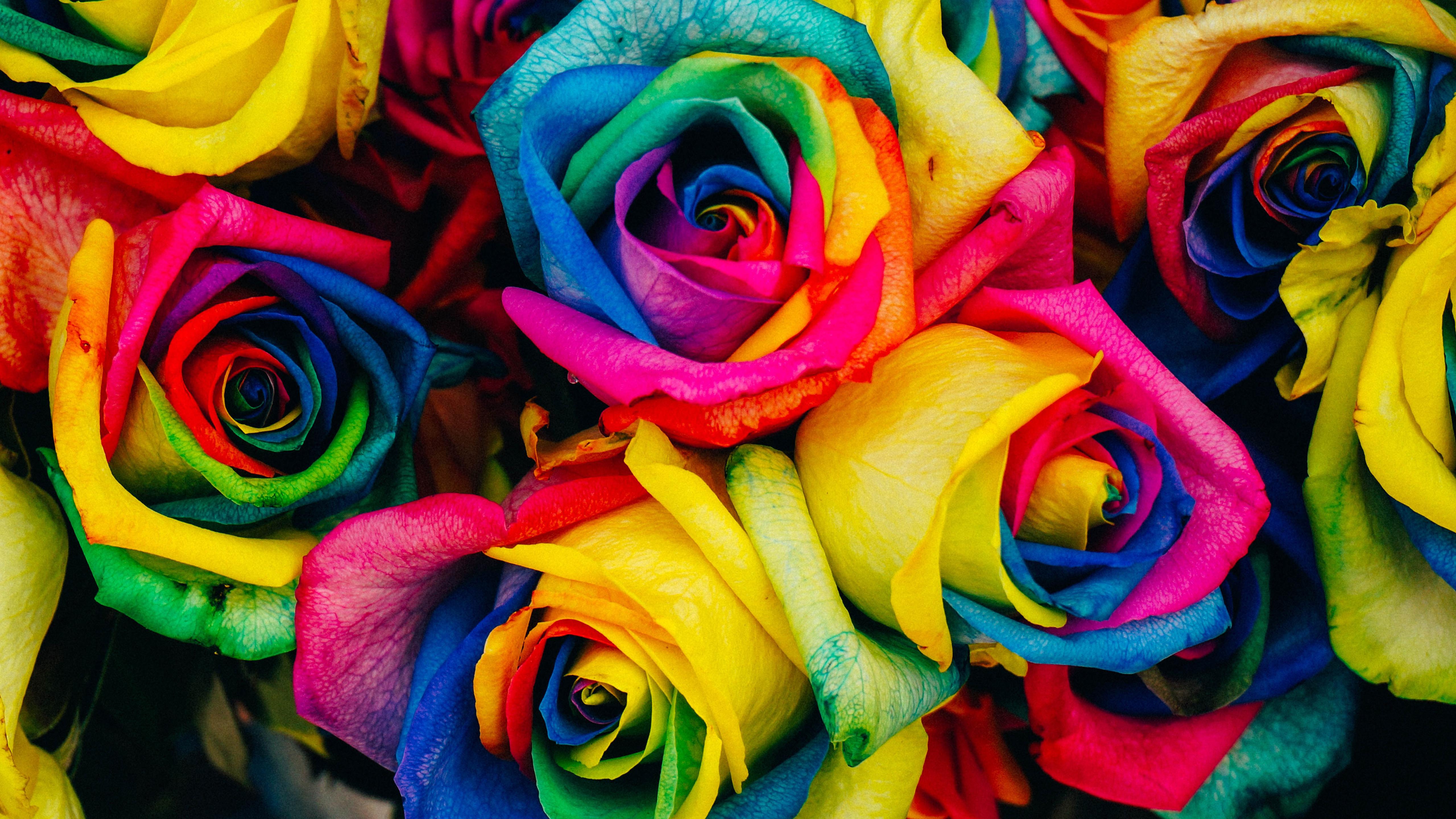 Những bôn hoa hồng 7 màu 4K